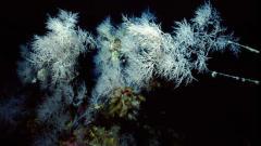 foresta-corallo-nero-scilla-1.jpg