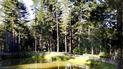 parco-nazionale-sila-4.jpg