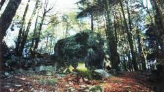 Lincantevole_bellezza_del_Bosco_di_Archiforo_con_la_Pietra_dellAmmienzo._Serra_San_Bruno._Parco_Naturale_Regionale_delle_Serre.jpg
