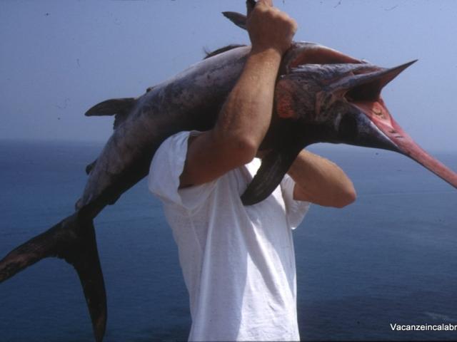 Pescespada